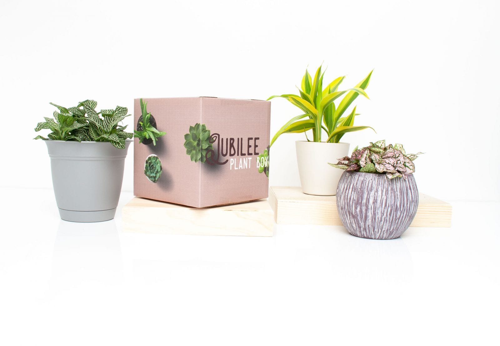Image of Jubilee plant box with various plants in vases